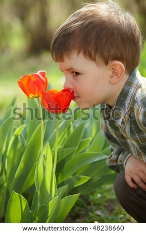 Four years old little boy smelling red tulip flower in spring garden. - stock photo