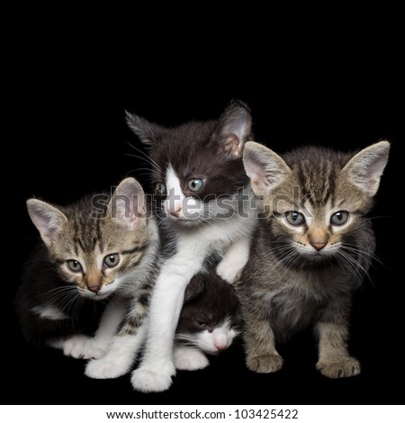 Four Young Kittens Isolated on Black Background - stock photo