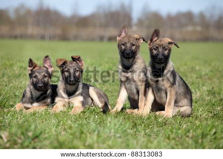 four young puppys laying on a green grass