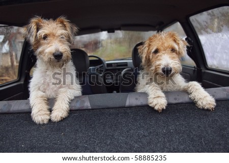 Fox terrier in the car. Mother and daughter. - stock photo