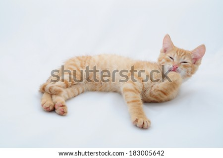 Foxy kitten washes his paw - stock photo