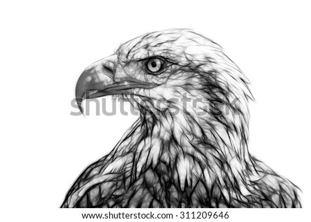 Fractal illustration of a Bald Eagle - stock photo