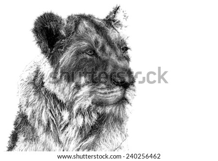 Fractal illustration of an African Lioness - stock photo