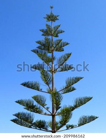 fractal tree - stock photo