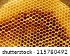 Fragment honeycomb with empty cells in sunlight - stock photo
