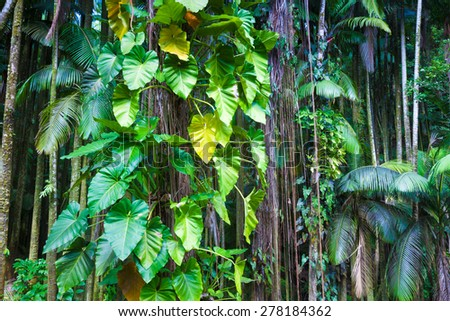 Fragment of a lush tropical jungle in Hawaii - stock photo