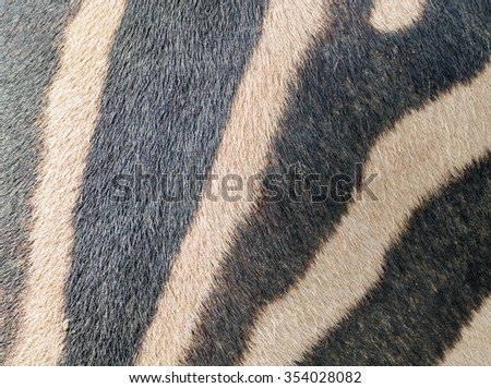 Fragment of a zebra skin for background