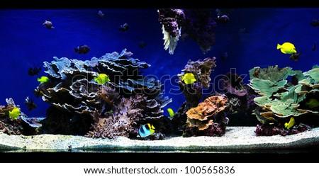fragment of blue aquarium full of water plants - stock photo