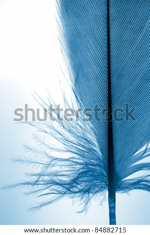 Fragment of feather close up. - stock photo