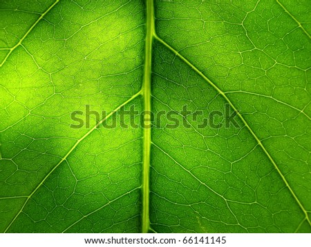 Fragment of leaf - stock photo