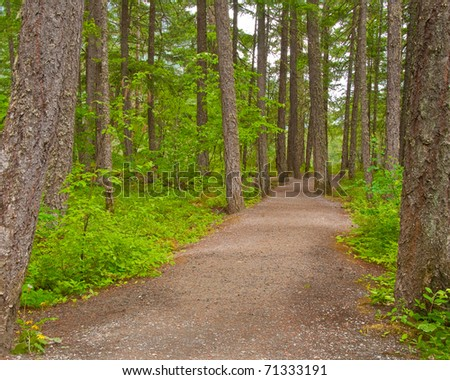 Fragment of Lower Falls trail in Golden Ears park, Vancouver, Canada. - stock photo