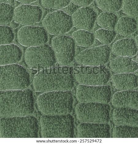 fragment of natural green snake  skin  - stock photo