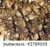 Fragment of plumage of collared scops-owl (Otus bakkamoena). - stock photo