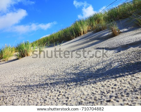 Fragment of sand dune with beach grass (Ammophila arenaria) along the Baltic sea coast