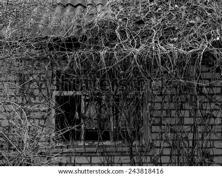 fragment of small abandoned house overgrown with lianas in black and white - stock photo