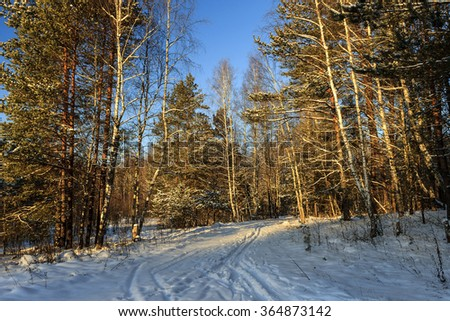 Fragment of winter forest with pine and birch trees covered with frost
