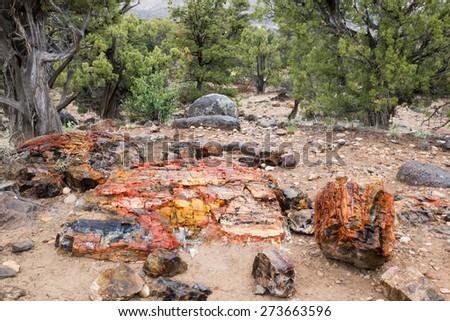 Fragments of petrified trees.  Escalante Petrified Forest State Park, Utah - stock photo