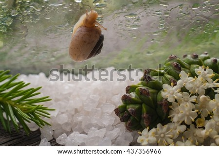 Fragrant salt for bathing . Small small bottles with salt. Salt color. Relaxation after work of the house. A sauna for health. To take a bath . Beauty shop. For women. Rain drops. The snail creeps. - stock photo