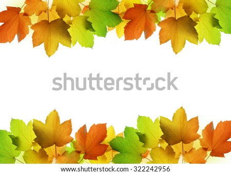 Frame from autumn leaves of maple tree on white background - stock photo