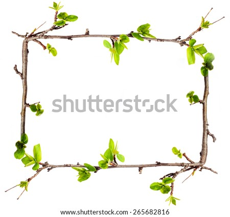 Frame from green branches. - stock photo