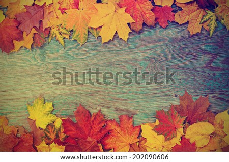 Frame from vivid colorful autumn leaves on the grunge wooden cyan desk, vintage seasonal background - stock photo