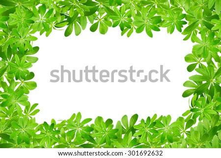 Frame made from sweet woodruff leaves in front of white background