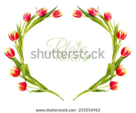 Frame made of red stripy tulips isolated on white background. Space for your text - stock photo