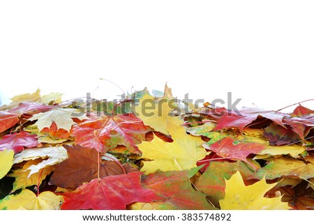 Frame of autumn maple leaves with copy space on white background - stock photo