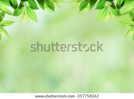 frame of beautiful green  young  leave branch on blur  background