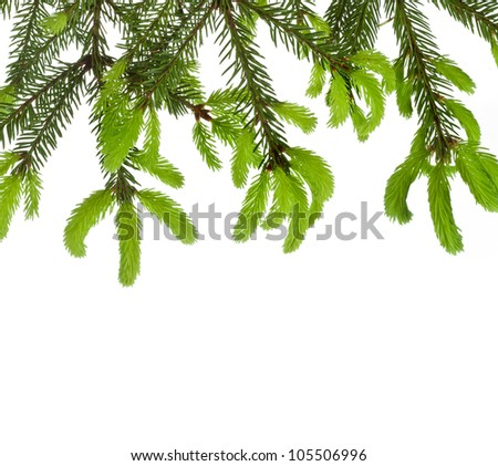 frame of fir tree branch with young soft shoots isolated on white - stock photo