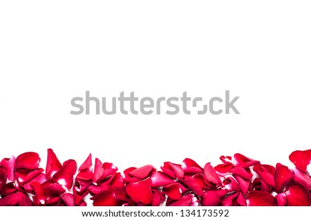 frame of red corolla rose - stock photo