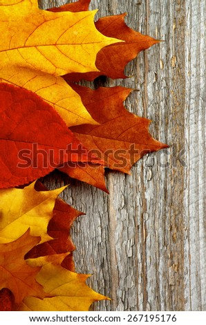 Frame of Red, Orange and Brown Autumn Leafs isolated on Rustic Wooden background - stock photo