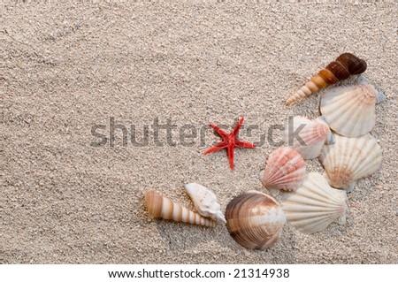 Frame of sea shells and starfish on sand, warm light - stock photo