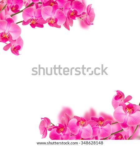 Frame Violet Orchid Flowers On Branch Stock Photo (Royalty Free ...