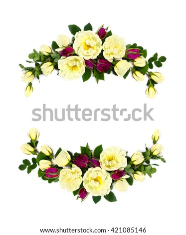 Frame of white and red roses (Burnet double white, shrub rose) on a white background with space for text - stock photo
