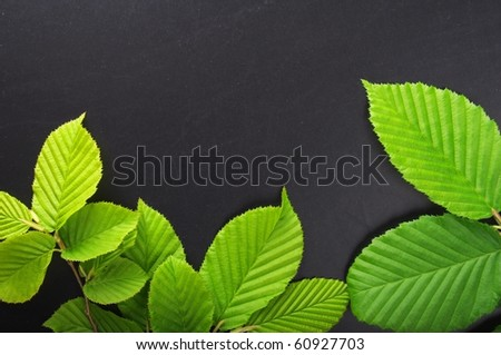 frame or border with green spring leaves and copyspace - stock photo
