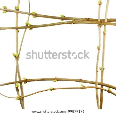 frame spring twig with buds