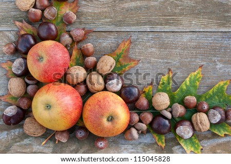 frame with nuts, acorns, chestnuts/autumn/fruits