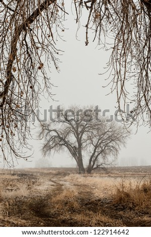 Framed Cottonwood - stock photo