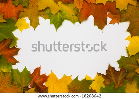 Framework from autumn multi-coloured maple leaves