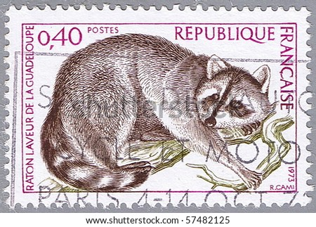 FRANCE - CIRCA 1973: A stamp printed in France shows raccoon, series, circa 1973 - stock photo