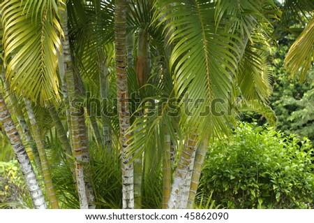 France, Martinique, garden of Balata