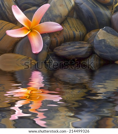 Frangipani flower and polished stone on tropical bamboo mat - digital composite,  water reflection and ripple effects.  - stock photo