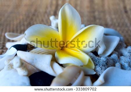Frangipani flower and white seashells - stock photo