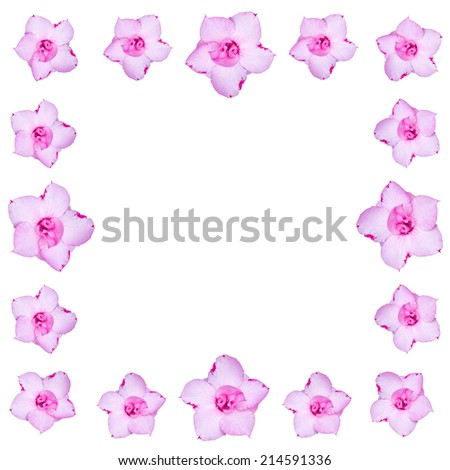 frangipani flower Background with Space for Text. - stock photo