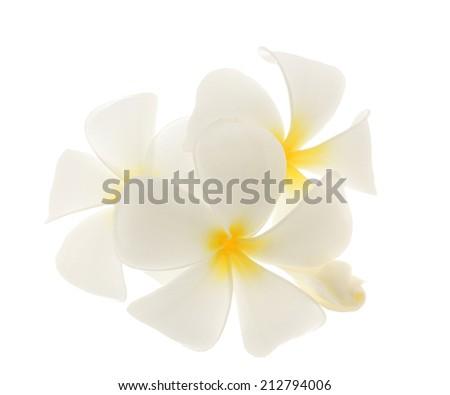 frangipani flower isolated on white backgrounds - stock photo