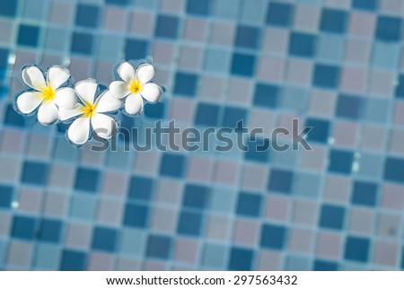 Frangipani flowers in the swimming pool - stock photo