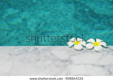 Frangipani flowers in the swimming pool