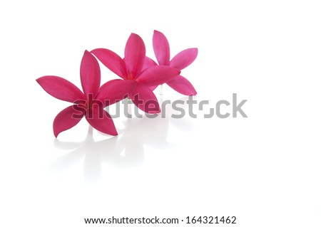 Frangipani flowers (selective focus and shallow DOF) with white background. - stock photo