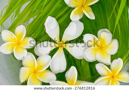 frangipani on wet palm leaf background - stock photo